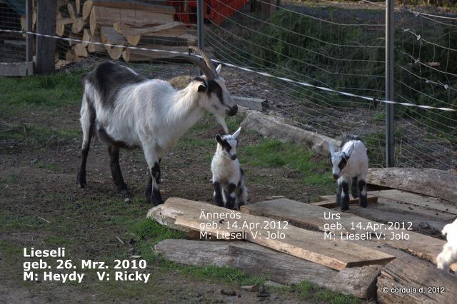 17.04.2012 - Lieseli *26. Mrz. 2010 (R9 / F8 / E8) mit Urs und Annerös bei Fuss