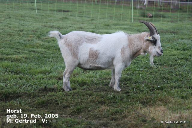 Horst *19. Feb. 2005