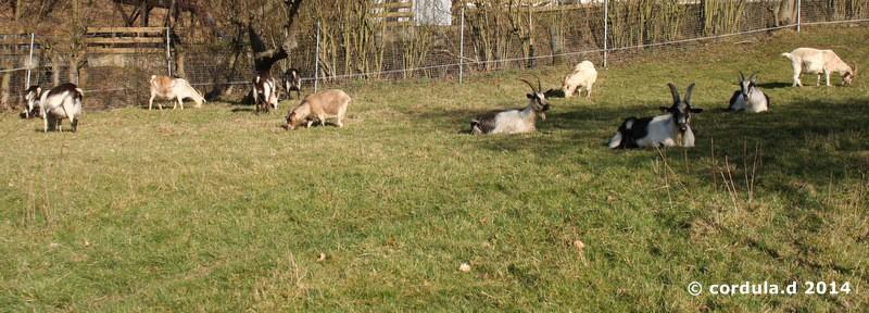 09.03.2014 - Die Herde